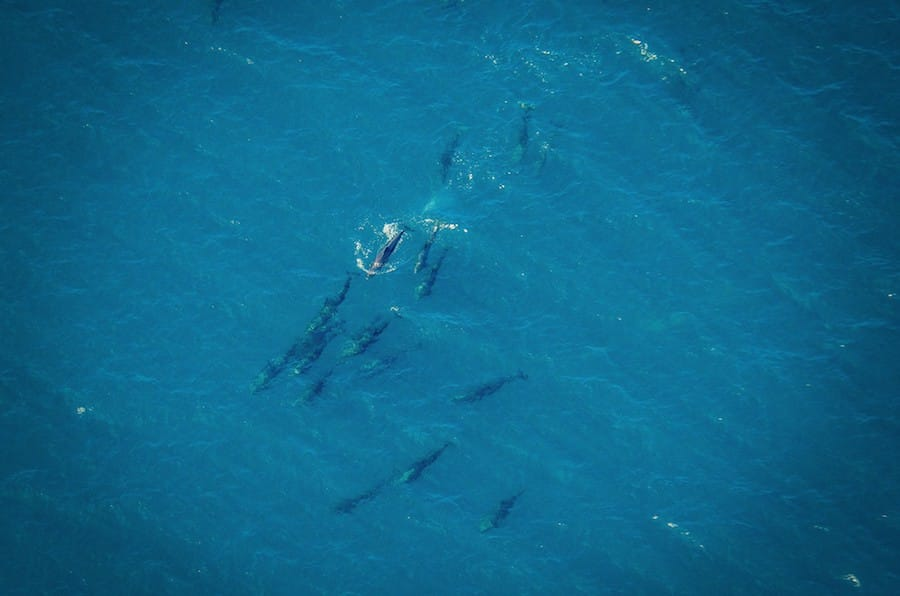 Dolphins from air